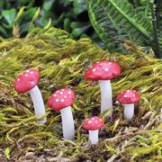 Fairy Garden Accessories- Fly Agaric Mushrooms (Fiddlehead)